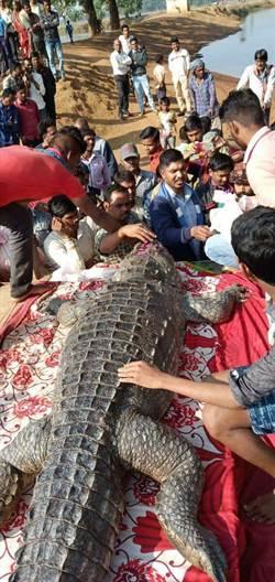印度130歲鱷魚去世  500人出席隆重葬禮