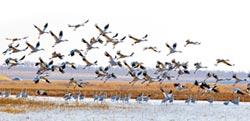 保護候鳥損失 江西農戶可獲補償