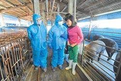 彰化41處養豬場 跟進飼料養豬
