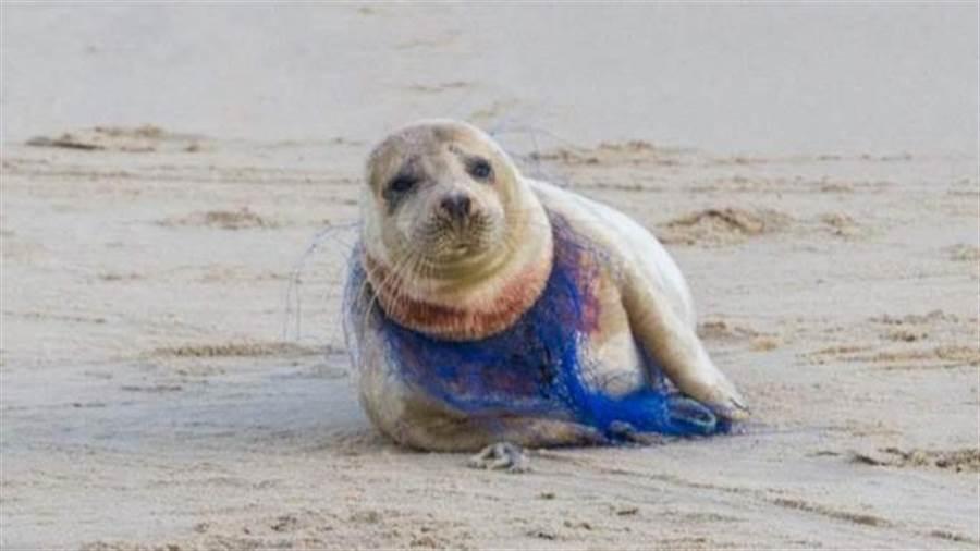 (翻攝自Surfers Against Sewage臉書)