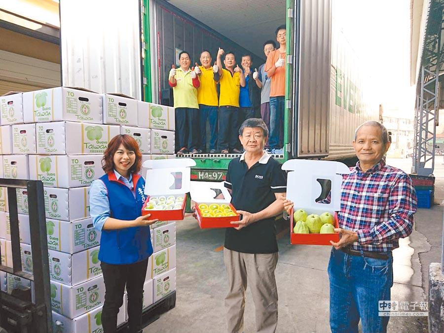 5公噸高雄番石榴12日首發裝箱前進新加坡,未來每2周將再出口5噸。(高市農業局提供)