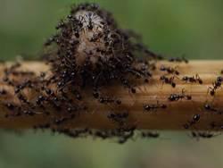 世界最大蟻穴曝光! 龐大王國耗費10年