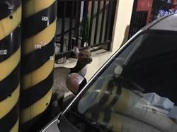 潮州警盤查毒品人口 意外協助「迷鹿」找到回家路