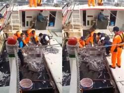 將軍漁港驚見「男屍卡漁網」45秒影片曝光
