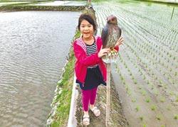 秧苗保衛戰 青農祭出猛禽牌