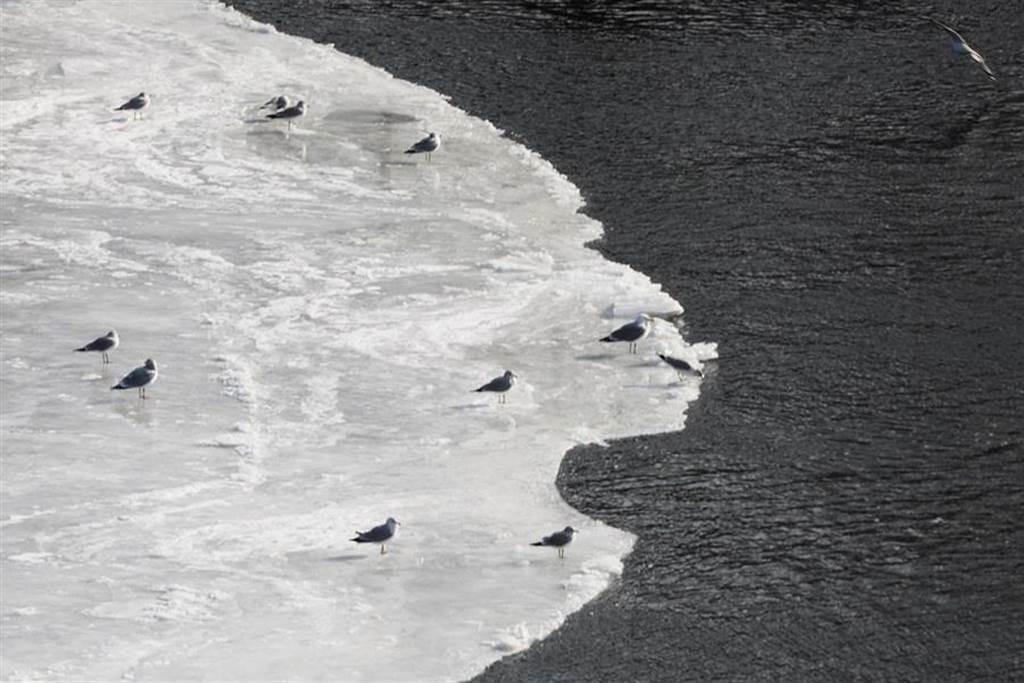 鳥類在冰盤上玩耍。(圖/路透社)