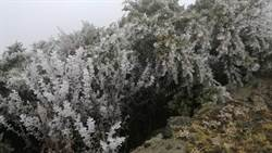 玉山霧淞未下雪恐創初雪最晚紀錄