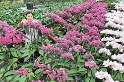 潛力巨大 陸花卉年產值逾2兆