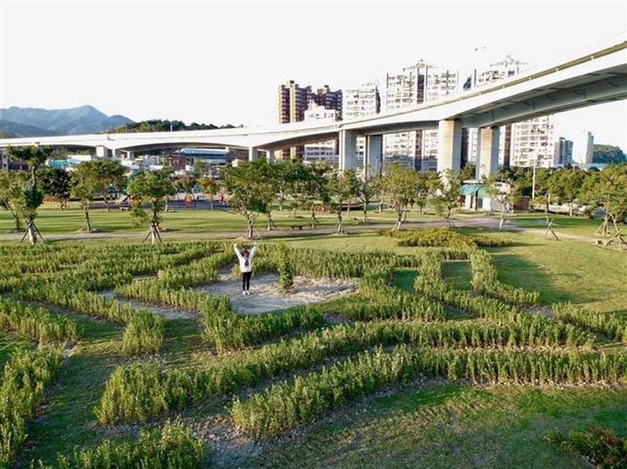 迷宫中心是一棵整型罗汉松,到达罗汉松就代表顺利征服迷宫。(新北市景观处提供)