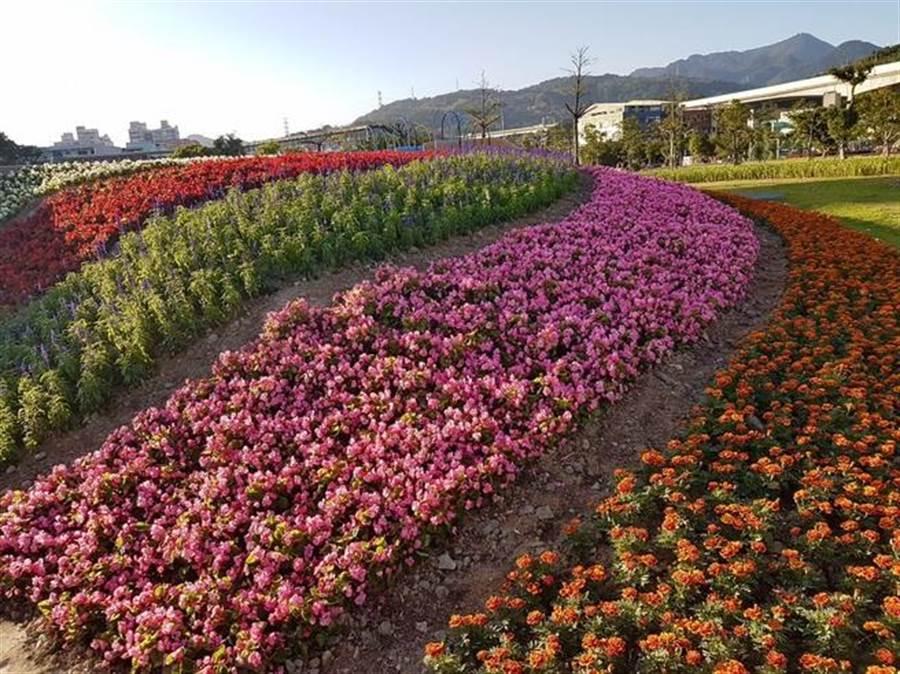 五股区防灾体健公园花海景致。(新北市景观处提供)