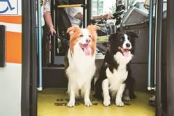 北市友善狗狗公車持續試辦 帶著毛小孩放風去