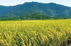 農糧署:農友把握最後2周稻作申報2月1日截止