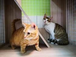 虐童案堂姊被羈押 6貓2狗送動物之家庇護