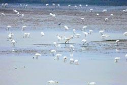 鶴之家鄱陽湖 生態獲國際肯定