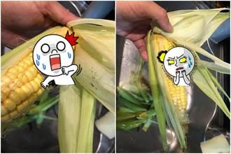 撕開玉米噁見膿包 網驚:超級神寶別丟!