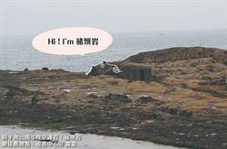 北海岸竟有「豬頭岩」!大師揮毫送春聯慶豬年