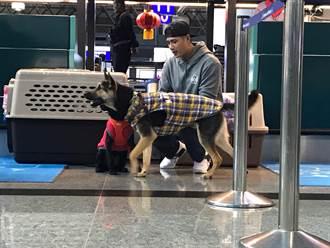 MLB》帶毛小孩到美國找幸福 陳偉殷與狗相處有訣竅