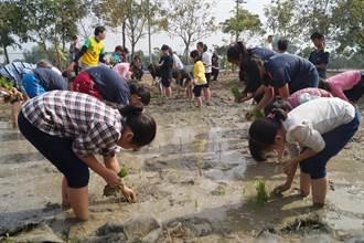 官田國小城鄉交流營 市區學童體驗插秧拔蘿蔔