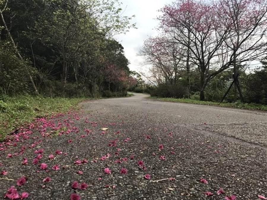 107年石碇二格步道花开景象。(新北市景观处提供)