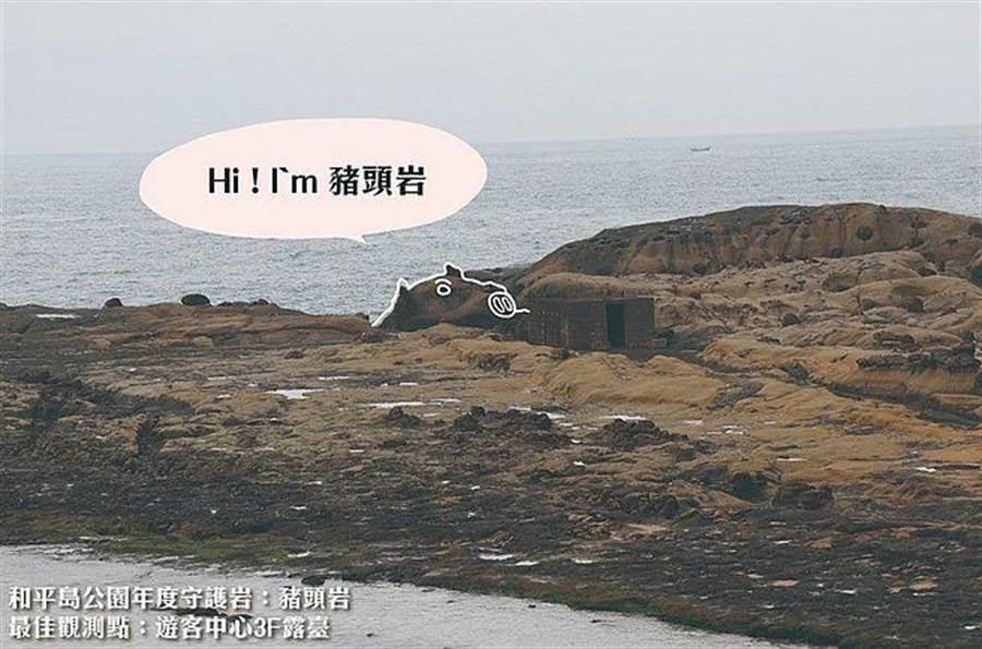 和平島公園年度守護岩「豬頭岩」。(北觀處提供)