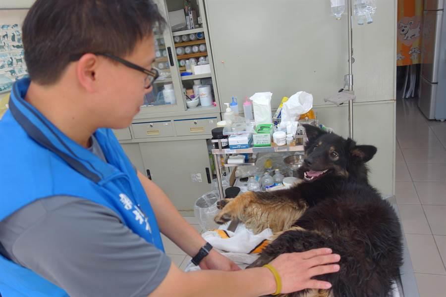 新北市板橋動物之家動保員蘇裕隆平日忙碌於危險的管制救援工作,每天還會利用空檔及休假日幫忙照護園區內飼養的園狗,常被民眾、志工稱為「暖男」。(葉書宏翻攝)