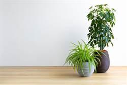 一盆吸掉家中80%有害氣體  5大植物代替空氣清淨機