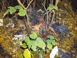 苑裡死豬遭焚燒 無法化驗