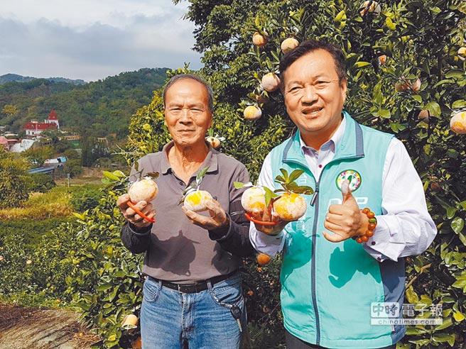 曾朝榮議員(右)為大坑茂谷柑的品質掛保證。(張妍溱攝)