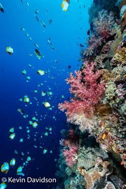 華航增班帛琉 行程安排更彈性