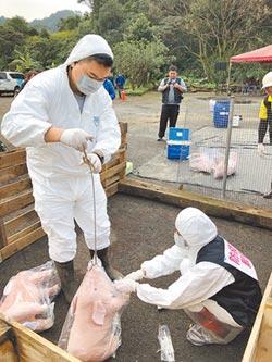 飼料成本多8倍 基隆唯一養豬戶不玩了