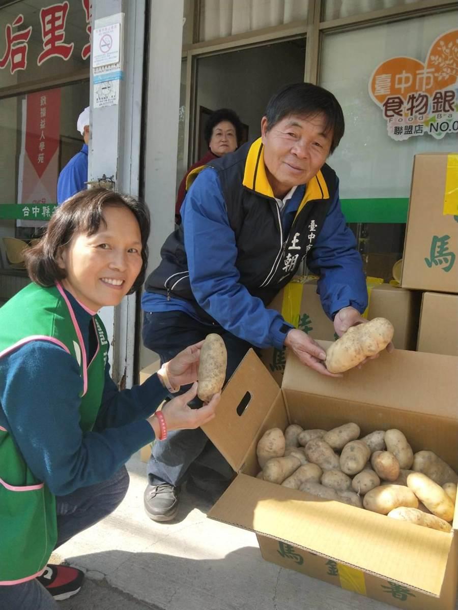 后里是台中最大的馬鈴薯產區,市議員王朝坤(右)拿起超大顆馬鈴薯。(陳淑娥攝)