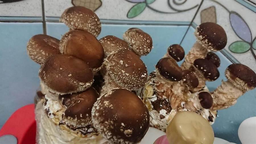 圖為友人有帶下車的正常香菇。(圖/翻攝自臉書《爆廢公社》)