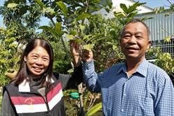 屏東農夫黃穎耍浪漫 為緬甸華僑太太研發紅毛丹新品種解思鄉苦
