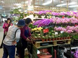 賞茶花辦年貨 今起就在台北花木批發市場