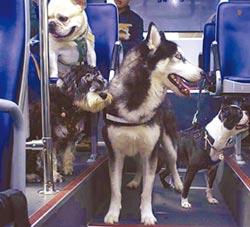 更多寵物趣事請看翻爆APP-寵物友善公車 毛孩出遊趣