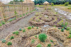 除草兼養雞 打造生態農園