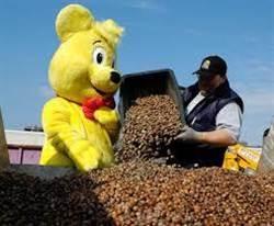 撿橡實換小熊軟糖 他請松鼠吃飯持續80年