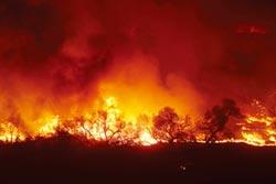 加州致命野火的元凶