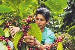 衣索比亞咖啡農怒吼