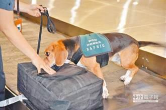 「護國神犬」被羞辱!不爽被檢查旅客嗆:髒狗聞過包不要了