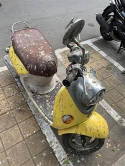 愛車遭鳥屎「火力全開」 網笑:停在馬桶下方