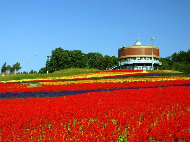 北海道「四季彩之丘」色彩鮮豔飽和的花卉美景讓人充滿活力
