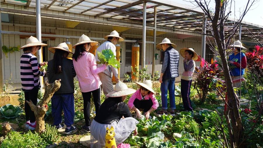 育仁國小老師黃煥勇28日帶著校內高關懷家庭的小朋友們,一起採摘農場內的蔬菜。(校方提供)