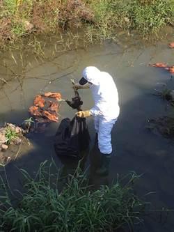 大排遭棄52雞屍 嘉義家畜所2今前往消毒 全力追查來源