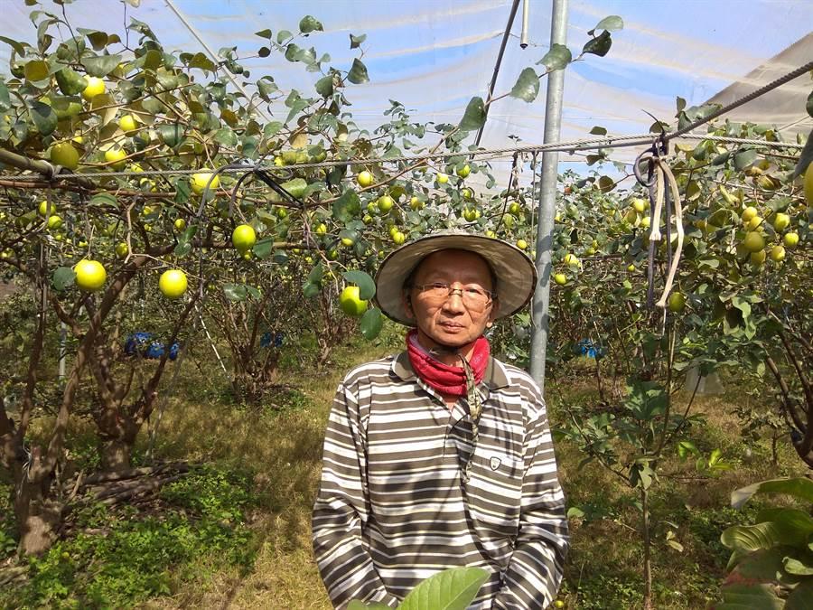 王新旺的果園採秀明自然農法栽種,有固定老客戶捧場。(劉秀芬攝)