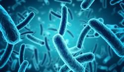 北極發現超級細菌 專家:2050年恐釀千萬人死亡