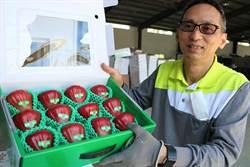林邊農會「芙華蘿莎」蓮霧 今年首度外銷香港、新加坡