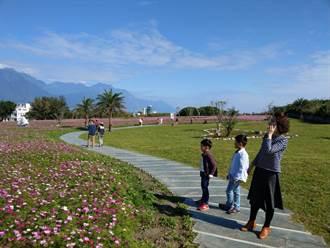 花蓮四八高地曼波園區一片花海   農曆年節賞花佳處