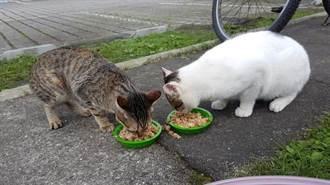 有貓瘟! 猴硐貓村驚傳2貓感染死亡 動保處緊急消毒防疫
