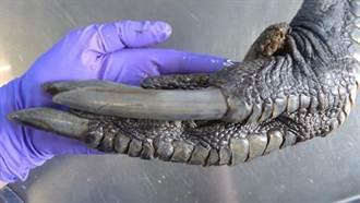 有著巨爪與鱗片 牠是鳥還是恐龍?